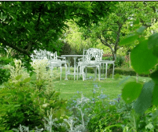 Lewis Cottage Gardens Spreyton Open for Charity NGS