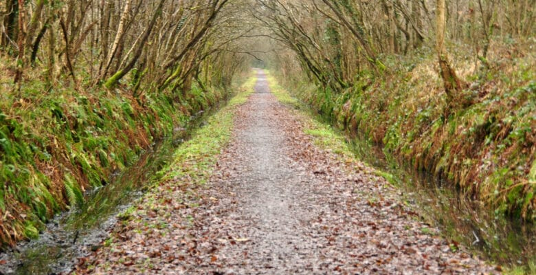 Tarka Trail In North Tawton