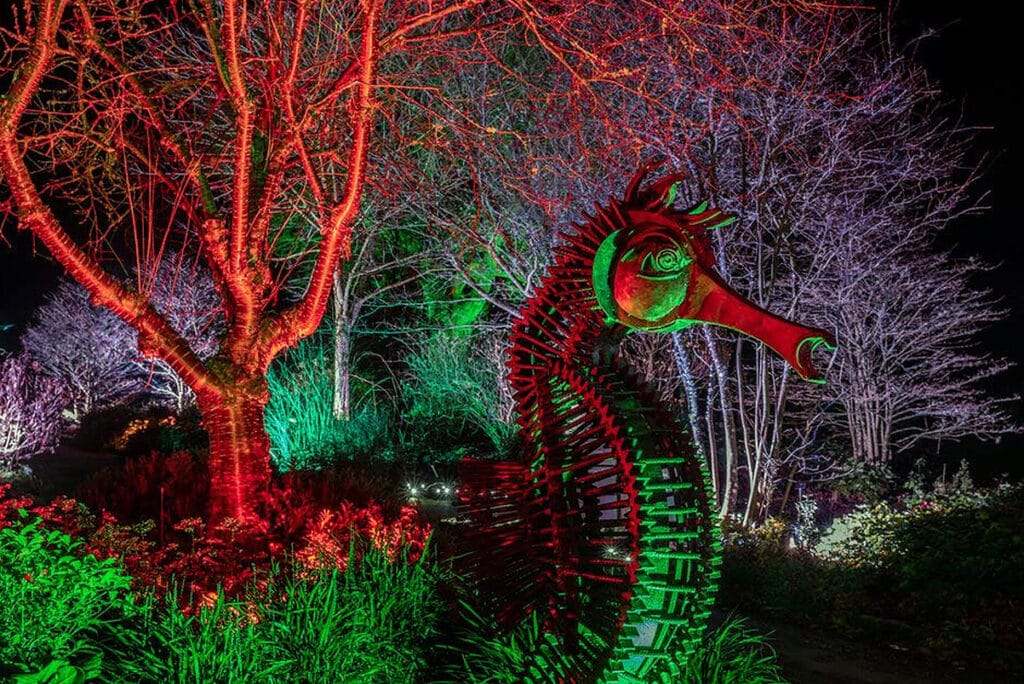 Glow Illuminated Adventure At RHS Garden Rosemoor